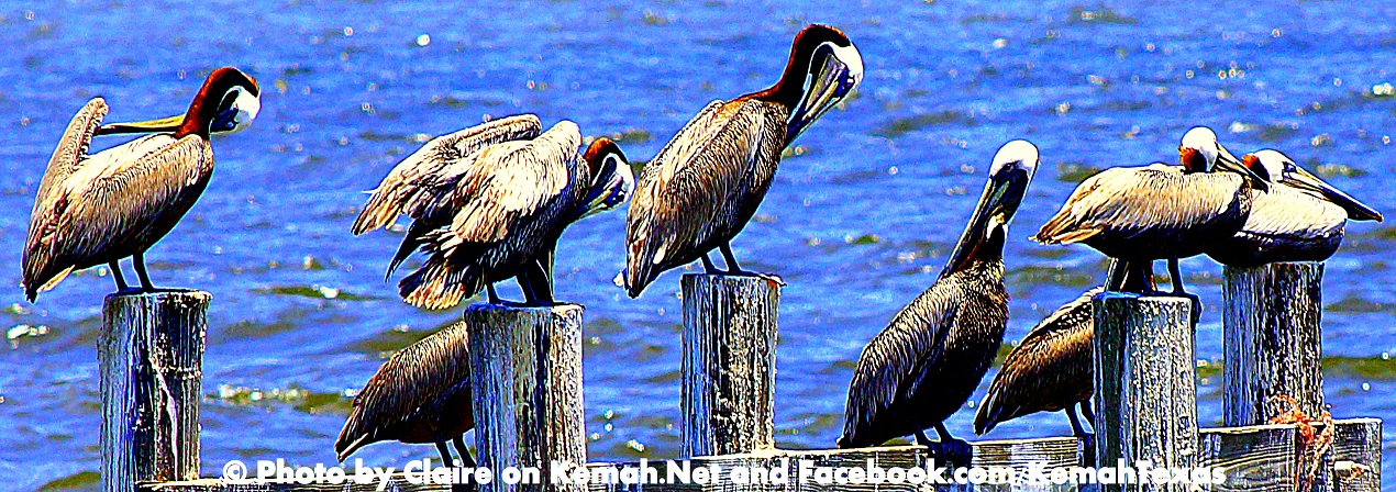 "Kemah.Net""s Picture of