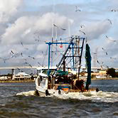"Shrimp Boat headed under Kemah Bridge with shrimp ""Photography is a calling an act of bearing witness"" The pictures on this web site are  © Claire Kemah.Net"